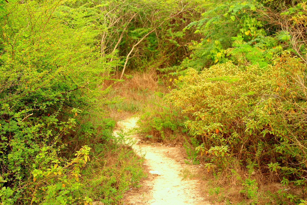 Path to Carlos Rosario Beach- Culebra