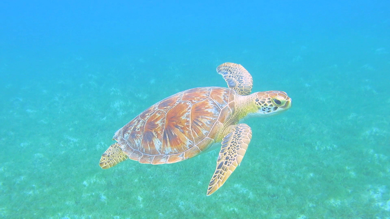 Video of the  1st  5 minutes of my  snorkel at Leinster Bay.