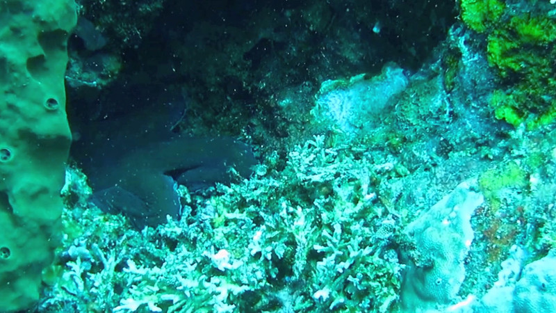 Hide and Seek with an Octopus Video-Click on the image above.