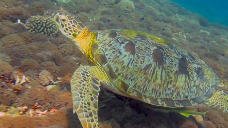 Video Swimming with Turtles in Gili Trawangan. Click on the image above.