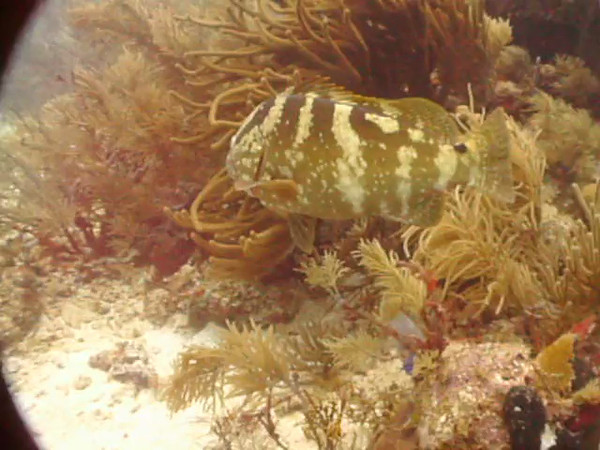 Grouper after he decided not to eat me.