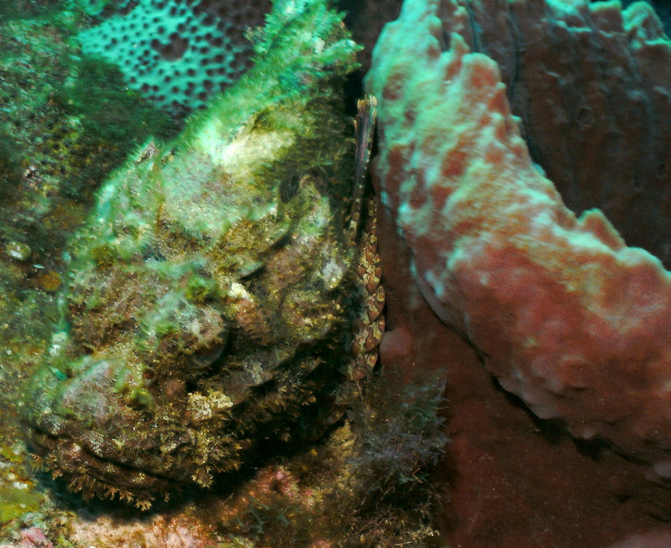 There's a Scorpion Fish in there.  Do you see her?
