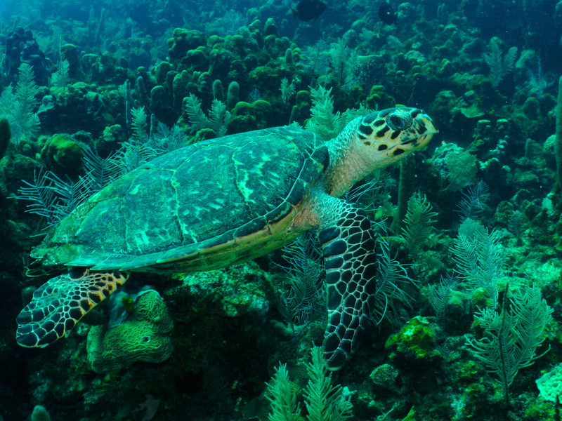 Ms. Turtle