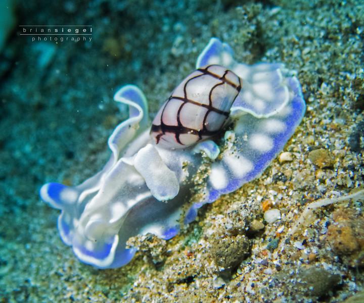 Bubble Snail