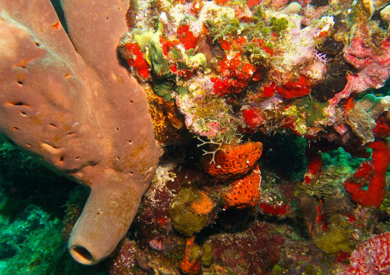 With Utila Cays Diving