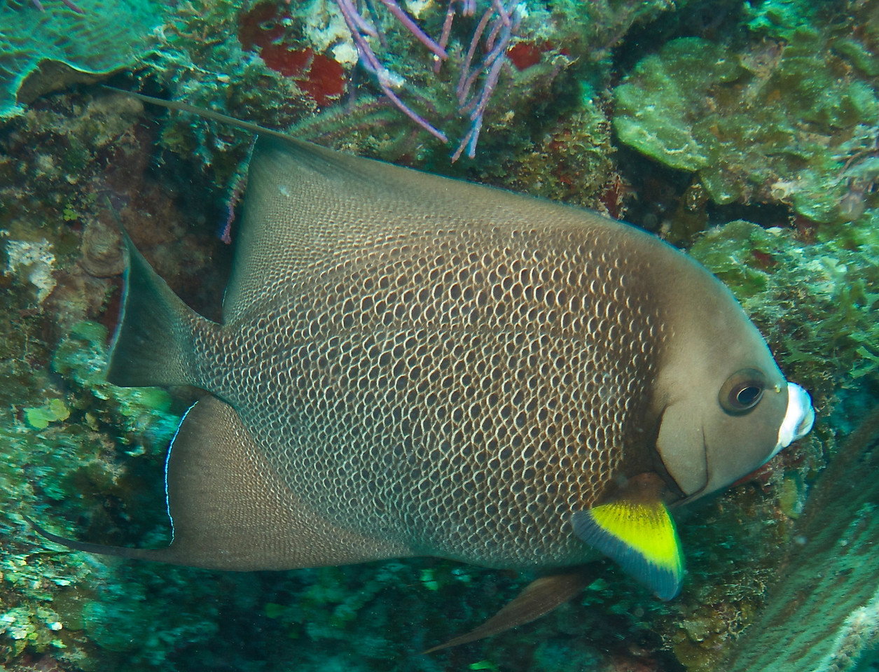 Diving with Utila Cays Diving