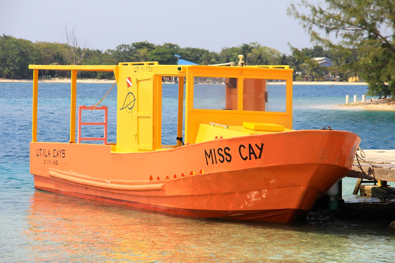 Utila Cays Diving. Best Dive company around and #1 on TripAdvisor.