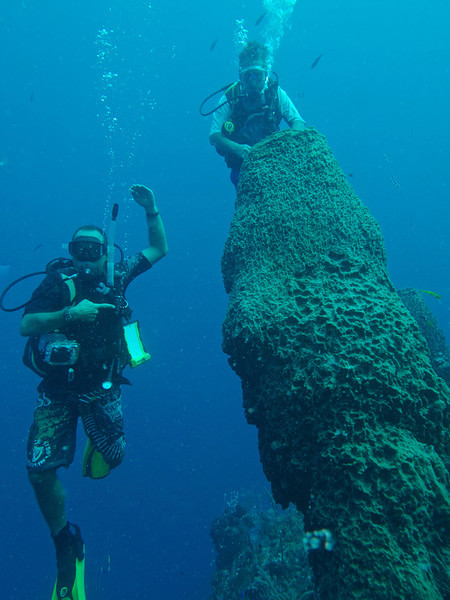 Huge Barrel Sponge-With Utila Cays Diving