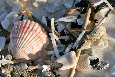 Sally sells seashells at the seashore... or the Gulf
