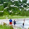0624 seagull beach