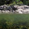 Mye spennende under vann -