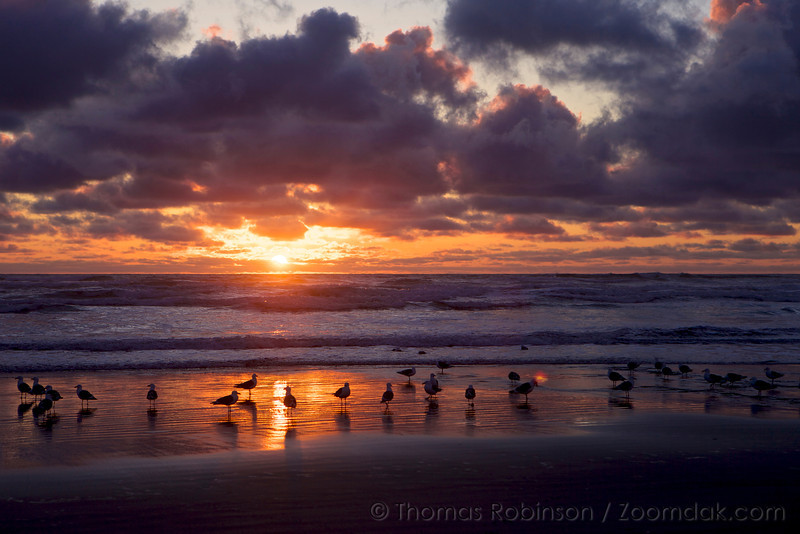 Seagull Shore at Sunset