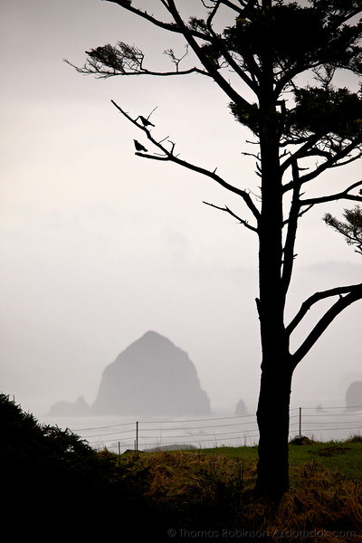 Crow Companion at Ecola State Park