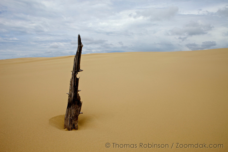 A lone tree snag persists among the dunes of National Sand Dunes Recreation Area, John Dellenback Dunes Area.