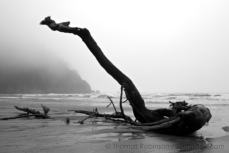 A large piece of driftwood sticks into the air in the fog at Shortsands Beach in Oswald West State Park.