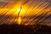 Dune Grass Glow