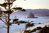 Haystack Rock and the Oregon Coast, framed by a sitka spruce at sunset in Cannon Beach, Oregon.