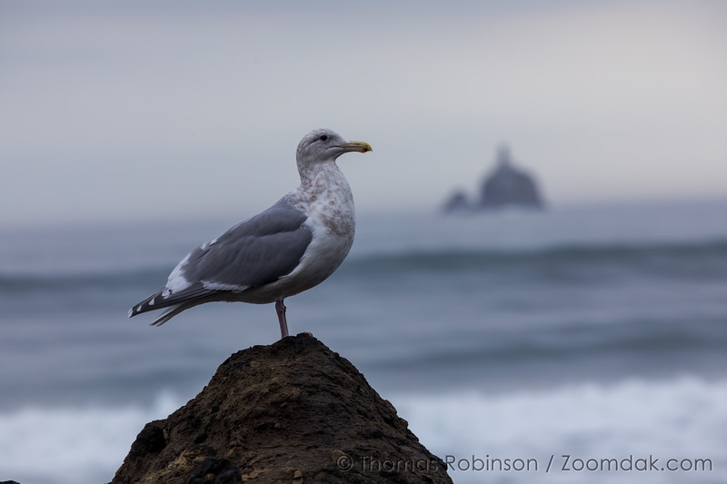 Seagull's View