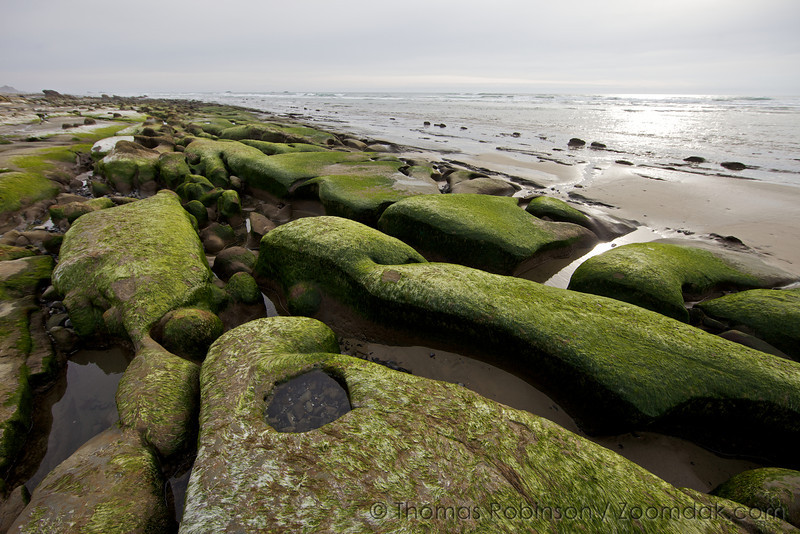 Curving rock formations covered in porphya algea creates a tidepool wonderland at Ona Beach on the Oregon Coast.