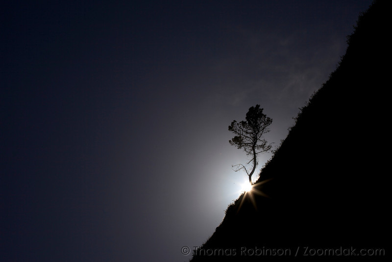 The sun sparkles through a lone tree silhouetted along a beach escarpment in Oceanside, Oregon.