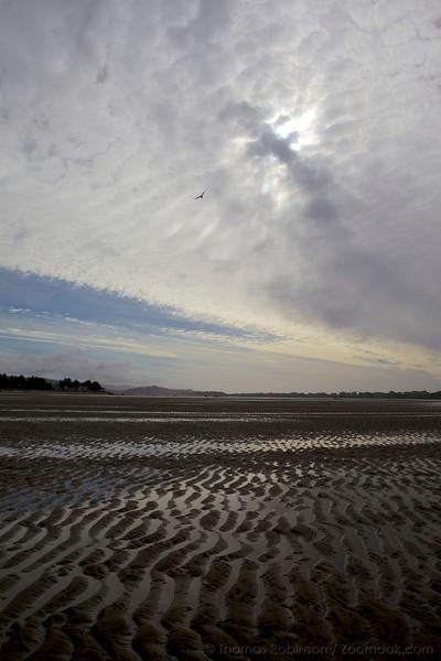 Beach landscape and a bird. Sand textures and sky textures. Beauty of the beach.