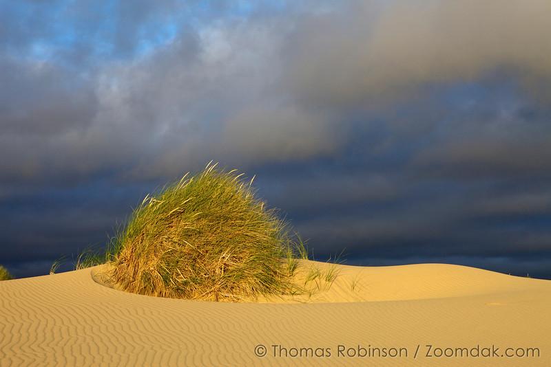 Dune Tuft