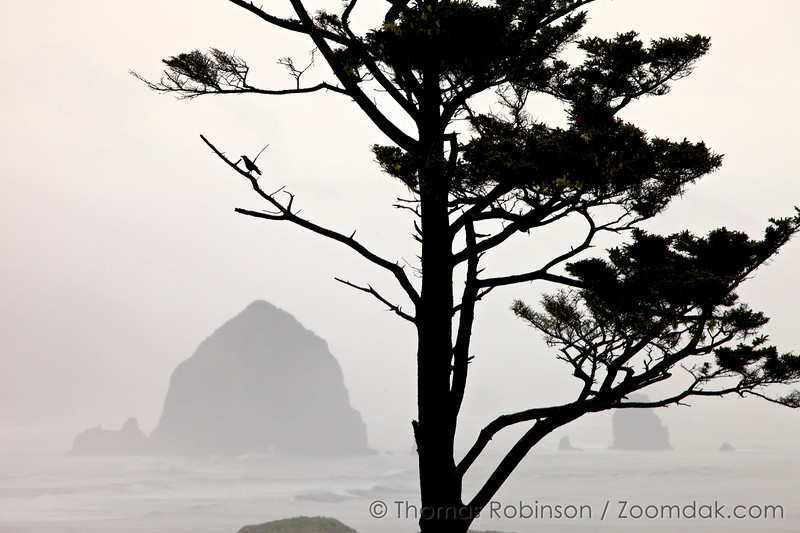 Crow at Ecola State Park