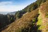 Trail up Neahkahnie Mountain