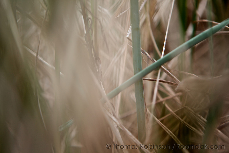 Dune grass creates abstract forms at Del Ray beach in Gearhart, Oregon.