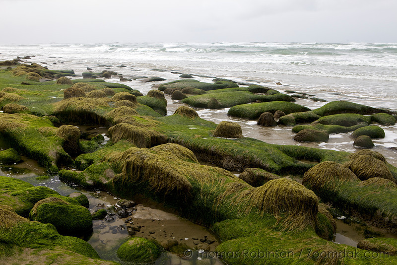 Algea Mounds of Ona Beach State Park