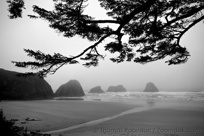 Thru The Branches, Crescent Beach