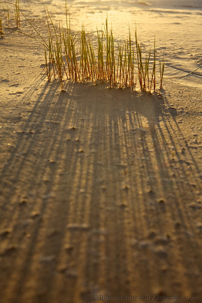 Dune grass create a fantastic pattern from the low sunset lighting.
