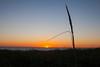 Dune Stalk at Sunset