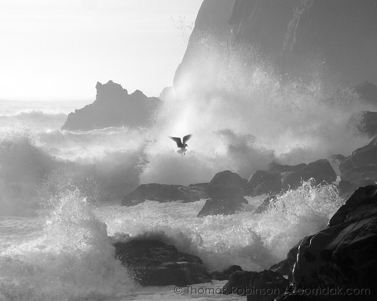 """After walking two salty miles over boulders under the Nehalem cliffs, a motion caught my eye. """"Why is that seagull landing down in those rocks when huge waves are pounding in?"""" I wondered.<br> While photographing the crashing waves at this spot, I saw this seagull fly by and land down in these rocks. It must have been looking for food. As these waves rolled in, I had my camera ready. As it took off, I captured this image.<br> This image captures a moment in the intricate dance of nature. It is a dance that swirls throughout all creation. In the motion of life, humans too look for ways to survive amidst the changing tides.<br> By capturing the glory of creation, I hope to shine the light of Jesus Christ's presence unto others; the truth that provides a steadfast hope through all the trials that life brings. <p align=""""right""""><em>Soli Deo Gloria</em></p> </p>"""