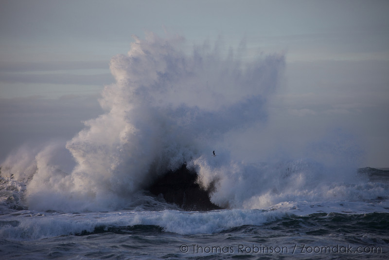 A seagull flies in front of a huge wave crashing off a rock below Ecola Point State Park.