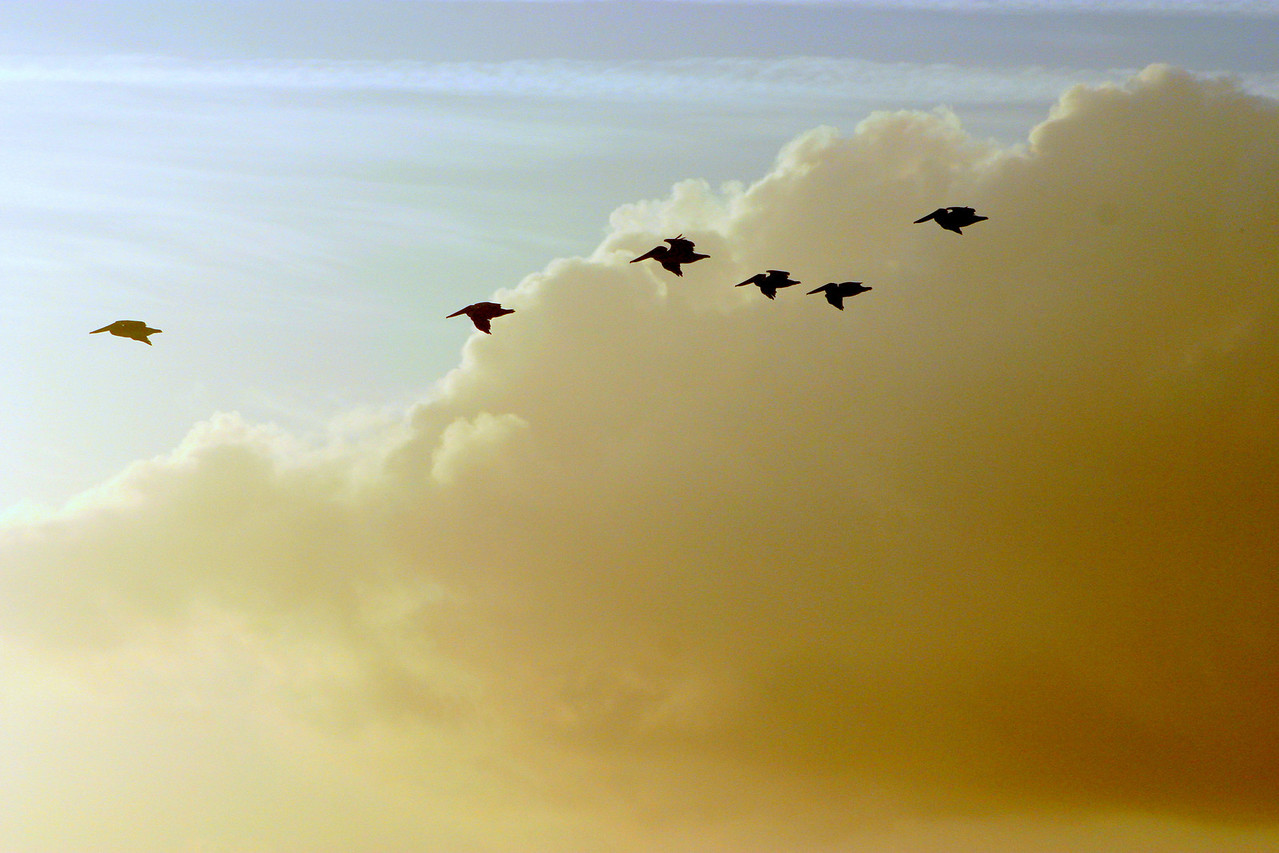 Cloud Pelicans