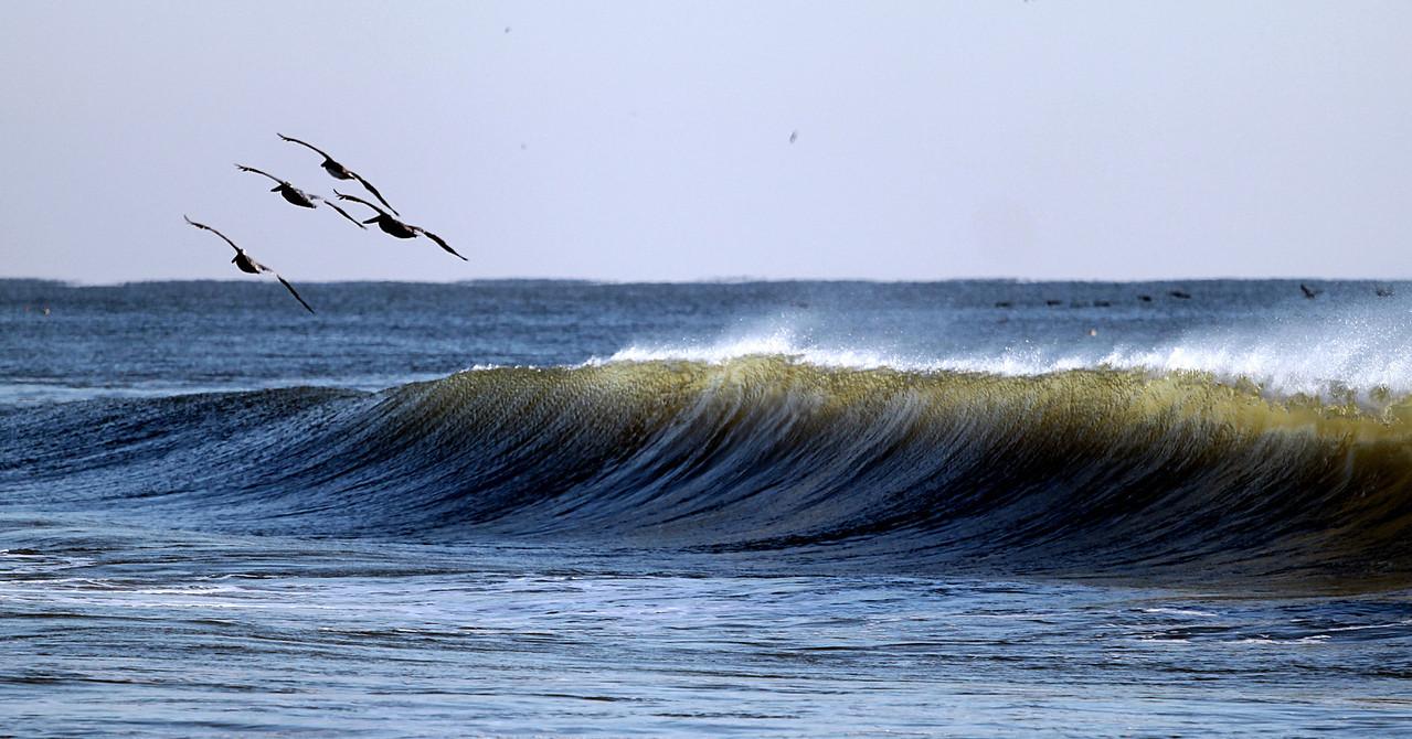 IMG_6800 birdwave