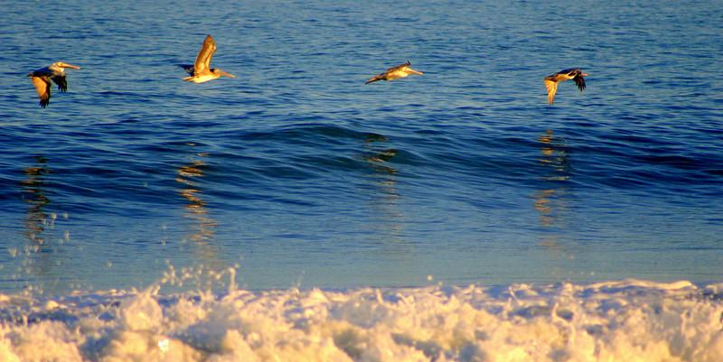 Pelicans Four
