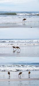 Sandpiper Triptych