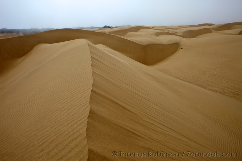 The top of a dune shows the break in wind patterns from rough to smooth in Pismo dunes, California.
