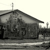 Abandoned building near an Organic Mandarin Orchard in California