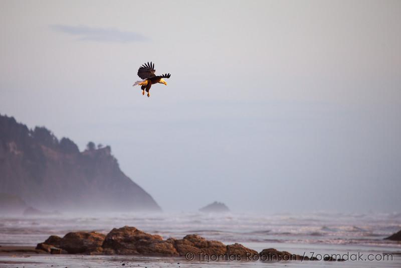 Bald Eagle Landing, Oregon Coast