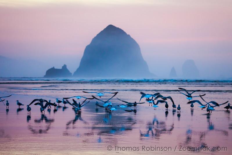 Sunset Seagull Liftoff