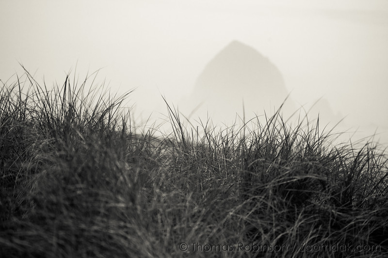 Moody Cannon Beach in the Dunes