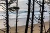 Coast thru Trees