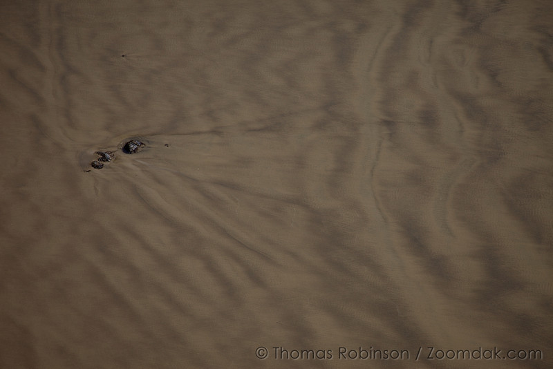 A group of rocks have created patterns in the sand of the outgoing tide.