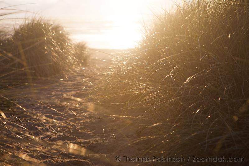Sparkling Dunes