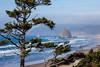 Sitka Spruce Frame Haystack Rock, Midday