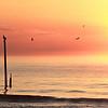 Dolphin off center pier, CB NC