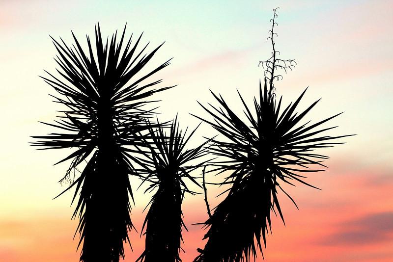 CB Locals-sunrise 4-7-11